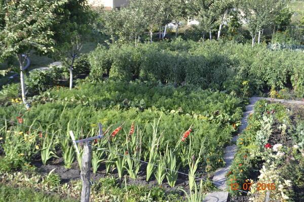 Общии вид огорода,одна половинка.