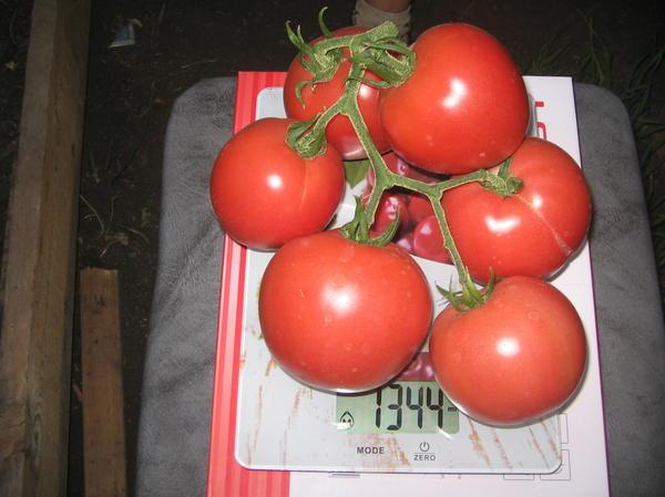 томаты 3 серии золотого малинового чуда
