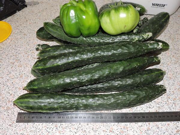Зелёный урожай)))