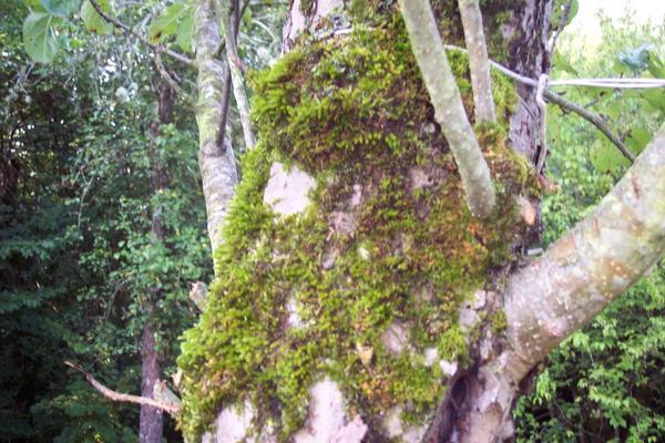 Вот такие жители на деревьях