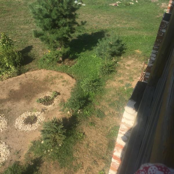 Елочки посадили, когда они были очень маленькими в горшочках. Теперь боюсь, что вырастут большими и места им будет мало.