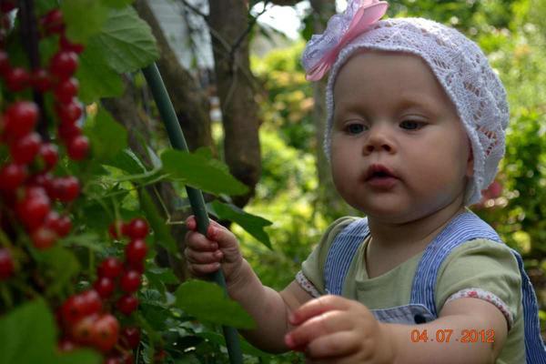 Смородина Натали по вкусу даже малышам