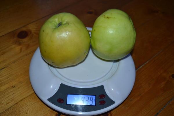 Сорт яблок к сожалению утерян