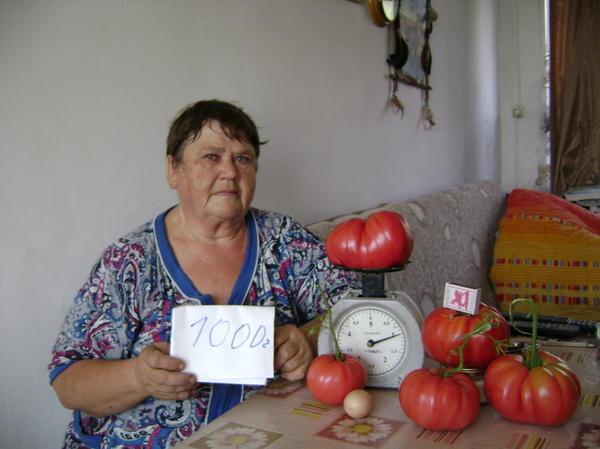 самый крупный помидор весом 1000 грамм, чуть меньше 800 грамм и 600  грамм