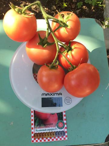 томат из серии малиновое чудо