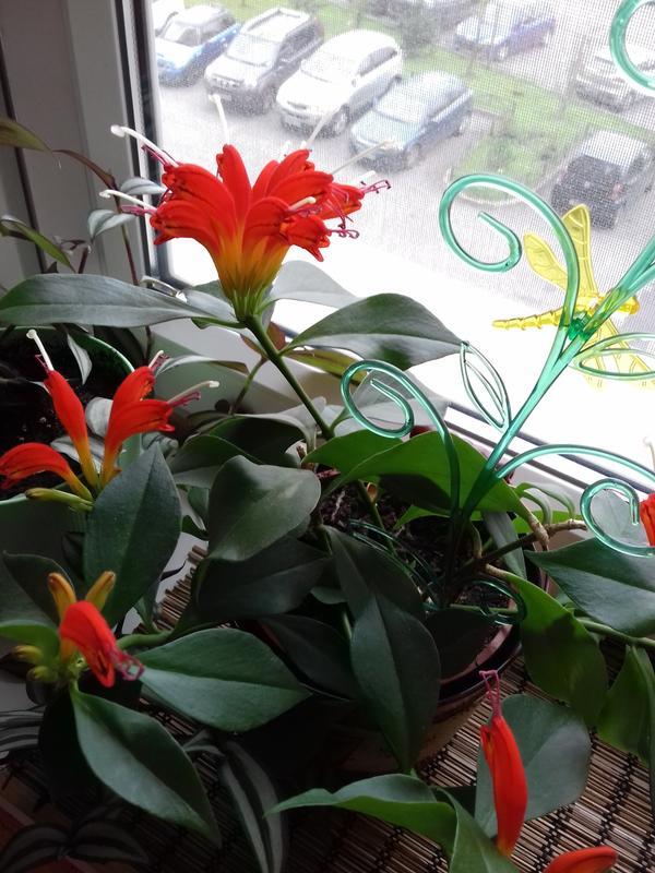 """мой """"неизвестный"""" цветок"""