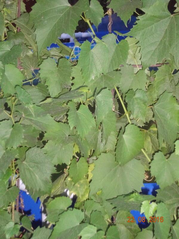 На фото растение, но не знаем, что это!