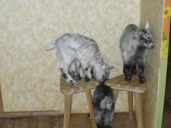 Василий, Даша и Миша