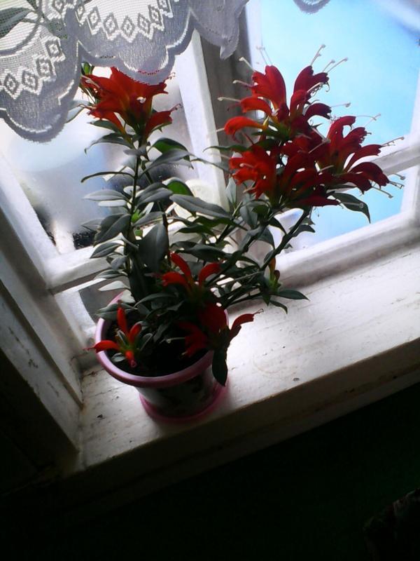 Кто знает как называется этот цветок