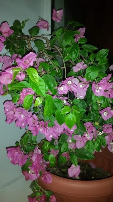 дерево с розовыми цветами