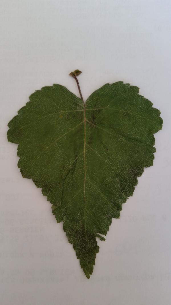 Лист дерева