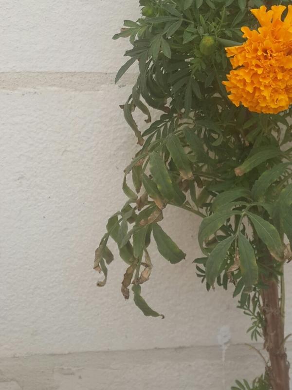 Листики на более-менее нормальном цветке