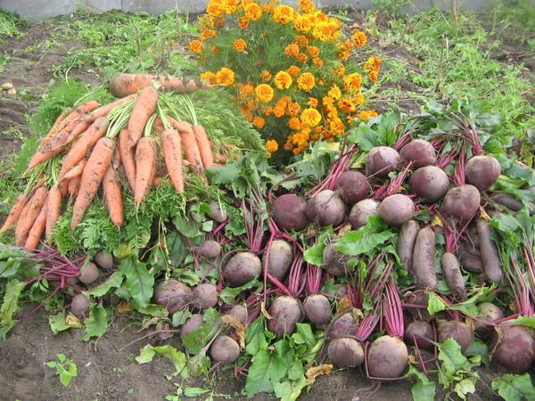 Малая часть урожая прошлого года, а в этом..... увы !!
