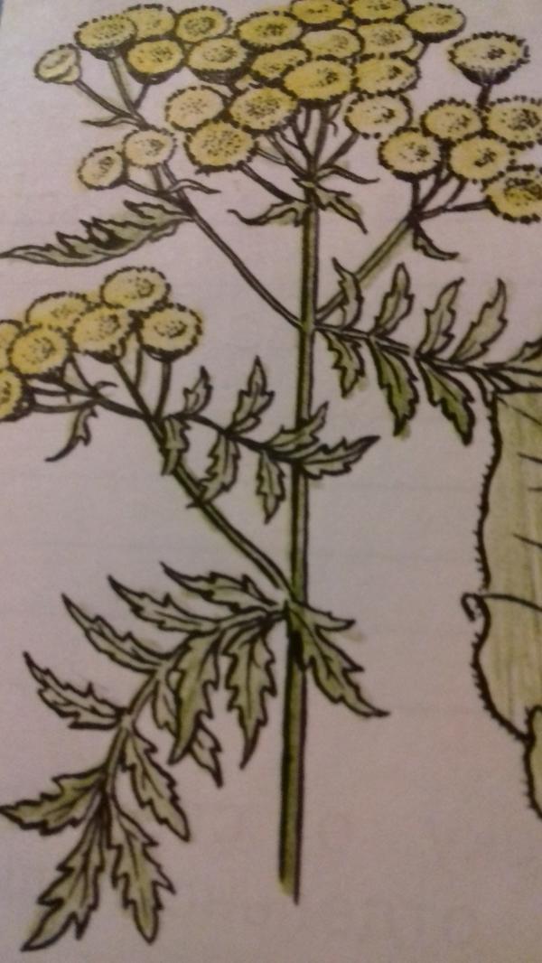 Как называется растения