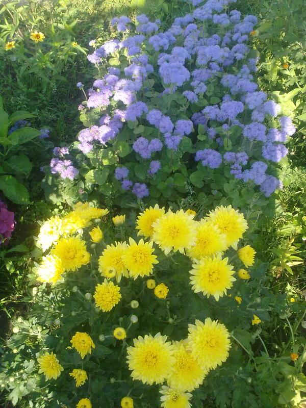Живые цветы на могилу. Какие растения посадить?