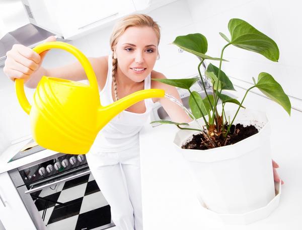 Выбираем цветы на кухню. И поливаем:)