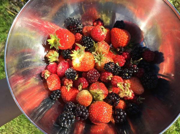 Свежесобранные ягоды