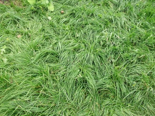 Лохматый газон своими руками