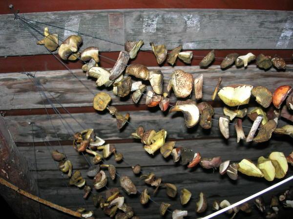 Грибы, развешанные для сушки