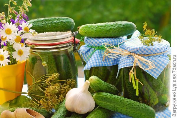 Солёные, зелёные, острые и хрустящие огурчики
