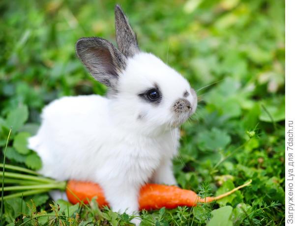 Милый кролик с морковью