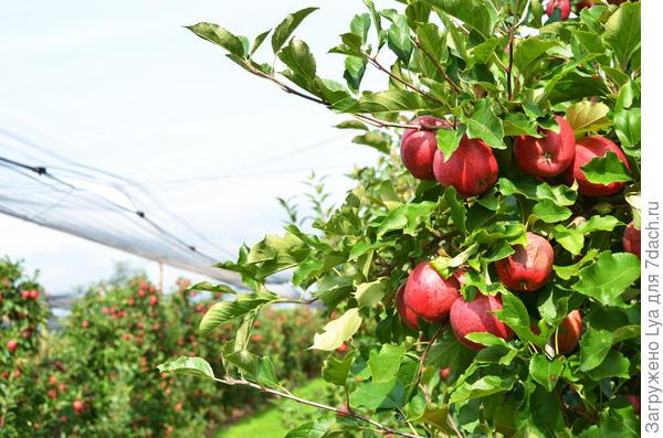 Сетка для сбора фруктов