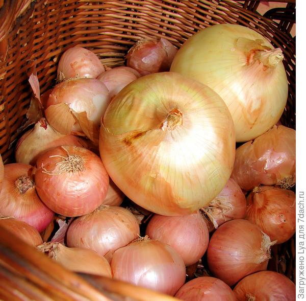 Как подготовить лук к хранению?