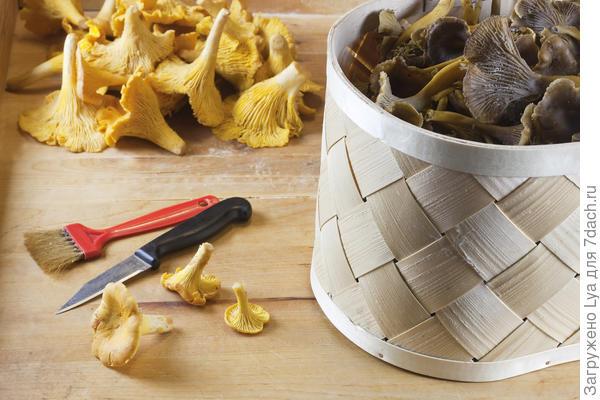 Очистка грибов