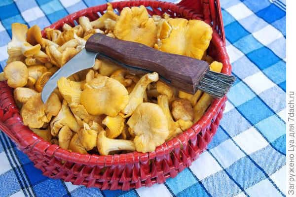 Сортировка, очистка и вымачивание грибов