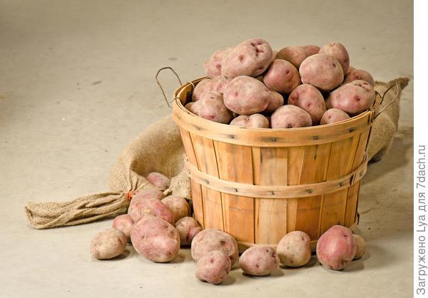 Хранение картофельного урожая