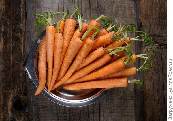 Какую морковь можно хранить