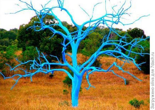 Вторая жизнь засохших деревьев