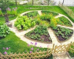 Какие растения можно совмещать на одной грядке? Какими цветами можно украсить грядки?