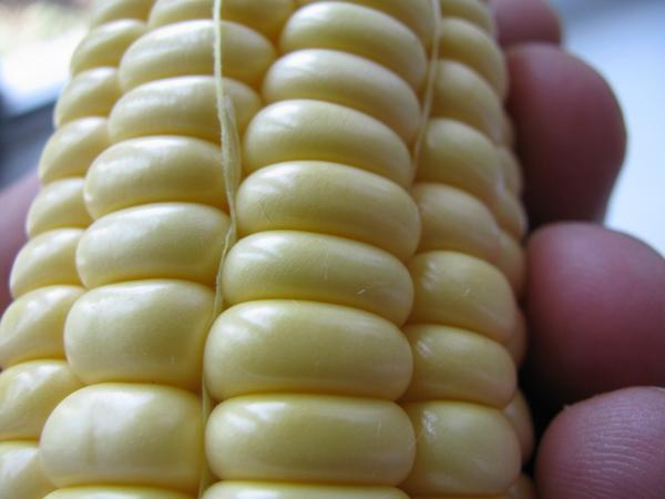 Зернышки кукурузы