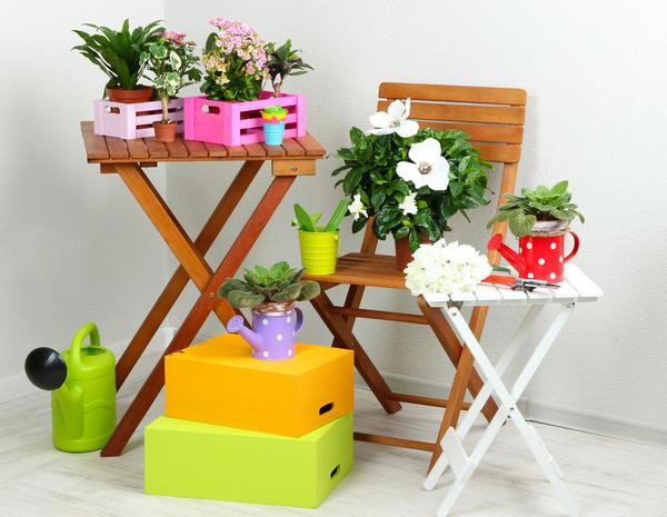 Комнатные растения необходимо регулярно подкармливать