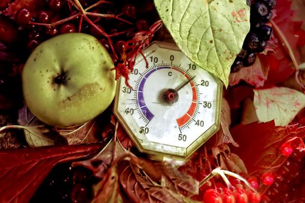 Важно соблюдение температурного режима