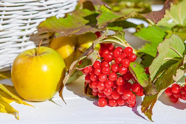 Яблоки моченые с калиновым соком