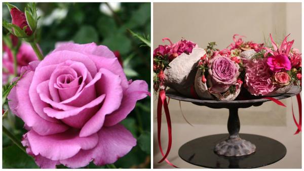 Роза сорт Shocking Blue, фото сайта rusroza.ru и ароматный венок из роз, фото Ярмилы Неугебауеровой