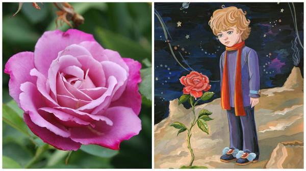 Роза сорт Saint Exupery в моем объективе и маленький принц, фото сайта www.proza.ru