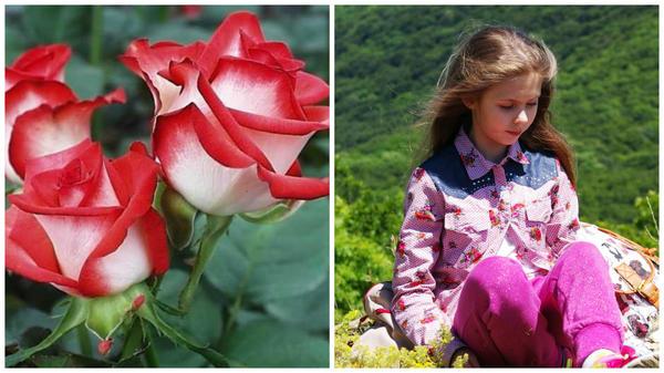 Роза сорт Blush, фото сайта photosflowery.ru и Лиечка с румянцем на Сандык Кая, Крым