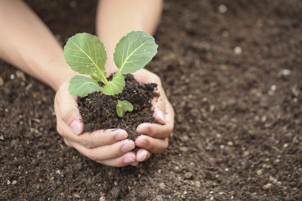 Богатый урожай начинается со здоровой крепкой рассады
