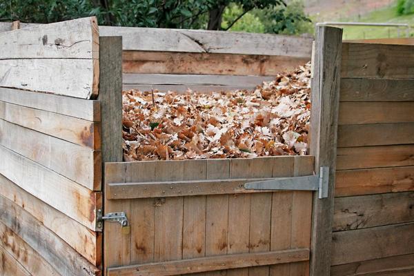Опавшую листву можно отправить в компостный ящик