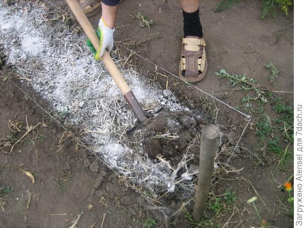 Перекопка почвы с суперфосфатом по осени