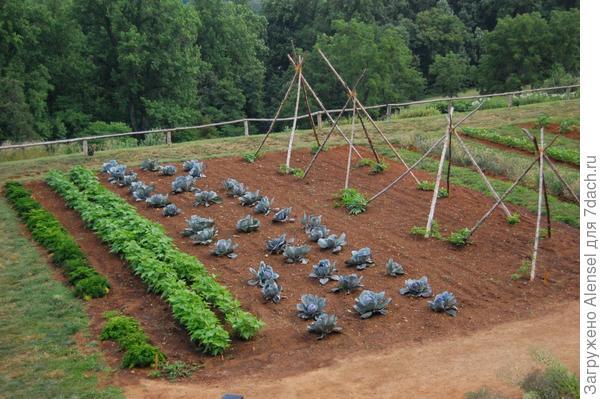 Количество внесения торфа в почву