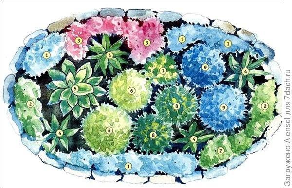 Схема клумбы с цветами
