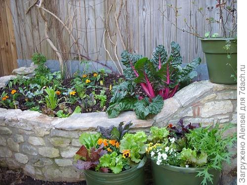 Цветы и овощи на одной грядке-клумбе