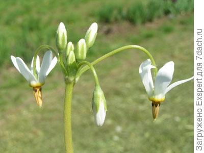 Додекатеон sanctarum
