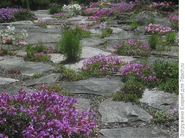 растения в гравийном саду