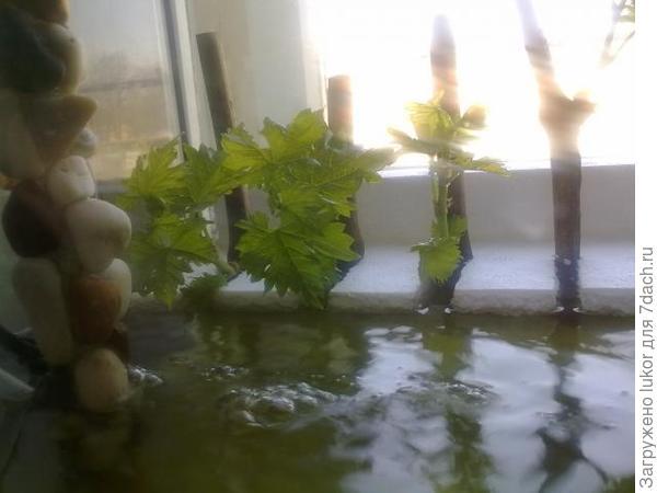 Пенопластовый мостик в аквариуме