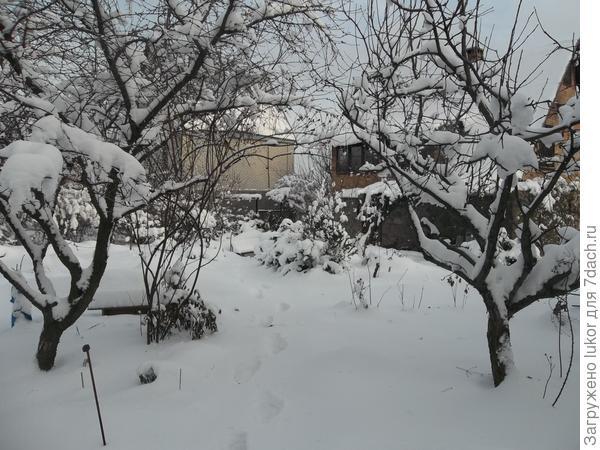 снежная шуба